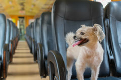 Dog travel by train Stock Photo