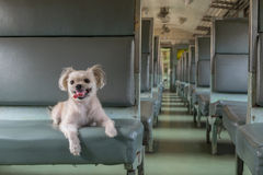 Dog travel by train Stock Images