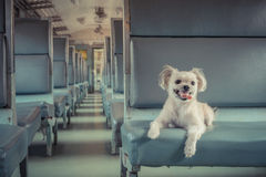 Dog travel by train Stock Photography