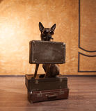 Dog traveler with cases in eyeglassess Stock Photography