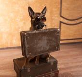 Dog traveler with cases in eyeglassess Stock Image