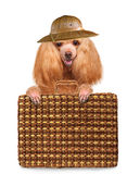 Dog traveler Royalty Free Stock Image