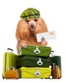 Dog traveler royalty free stock photo
