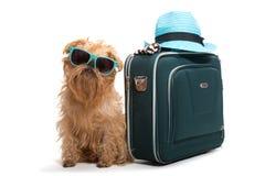 Dog traveler Stock Photography