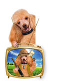Dog traveler Stock Photography