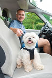 Dog traveling in a car Stock Image
