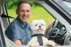 Dog traveling in a car Royalty Free Stock Image