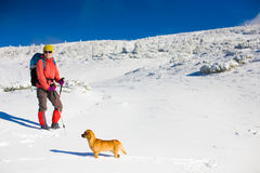 The dog travels in the mountains in winter. Royalty Free Stock Photos