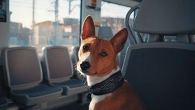 Dog travels in train stock video