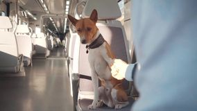 Dog travels in train stock video footage