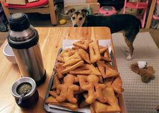 A dog, a tray of fritters and mate tee