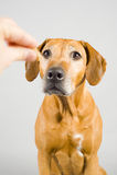 Dog treat Stock Images