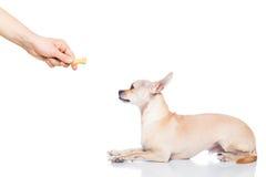 Dog treat Stock Photo