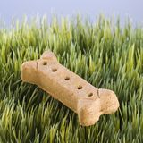Dog treat laying in grass. Stock Photography