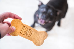 Dog and treat. A pet dog looking up at a biscuit with her name on it Royalty Free Stock Photography