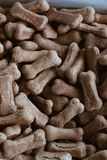 Dog treats in a container. Copy, pets royalty free stock photography