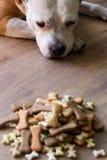 Dog with treats Royalty Free Stock Photo