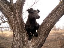 Dog on the tree Stock Photography