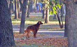 Dog, Tree, Dog Like Mammal, Mammal royalty free stock image