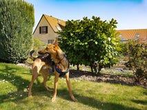 Dog, Tree, Plant, Dog Like Mammal stock photo
