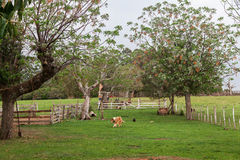 Dog and Trees Farm Royalty Free Stock Image