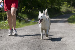Dog trekking Stock Photos