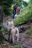 Dog on the trekking trail stock photos