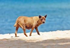 Dog on a tropical beach Stock Photos