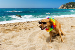 Dog on tropical vacation Stock Images