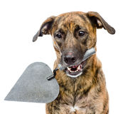 Dog with trowel. isolated on white background Royalty Free Stock Photos