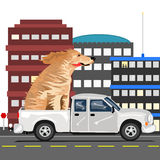 A dog and a truck. A large dog is getting a ride in the city in the back of a pickup truck Stock Photography