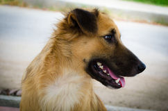 Dog True friend. Dog cat animal brown friend mammal Stock Photo