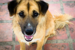 Dog True friend. Dog cat animal brown friend mammal Royalty Free Stock Photo