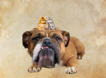 Dog and two cats Stock Images