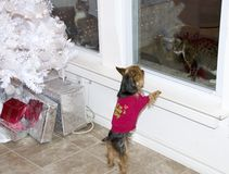 Dog and two Cats at Christmas Tree. Two cats looking in windows at Christmas tree and presents while dog looks at one of the cats Stock Photo