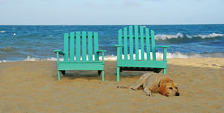Dog and two green chairs Royalty Free Stock Image