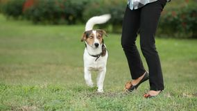 Dog On Two Legs stock video footage