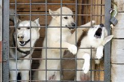 A dog and two puppies are looking through the metal grid of a cage door. royalty free stock photo