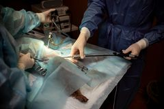Dog under anesthesia on the surgical table. Operation to sterilize the animal in the operation royalty free stock photos