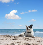 Dog under blue sky Stock Photo