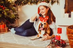 Dog under the christmas tree at home, stock images