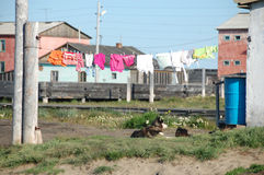 Dog under clothes drying on line Stock Photos