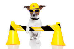 Dog Under Construction Royalty Free Stock Photos