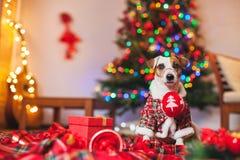 Dog under ett julträd arkivfoton