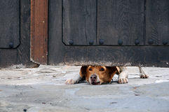 Dog Under the Gate Royalty Free Stock Photography