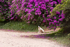 Dog Under a Purple Blooming Tree Royalty Free Stock Photo