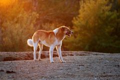 Dog under sunshine Stock Images