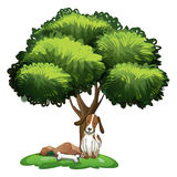 Dog under tree Royalty Free Stock Photo