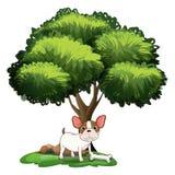 Dog under Tree Royalty Free Stock Image