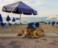 Sleeping dog. Dog taking nap on the beach under umbrella Stock Images